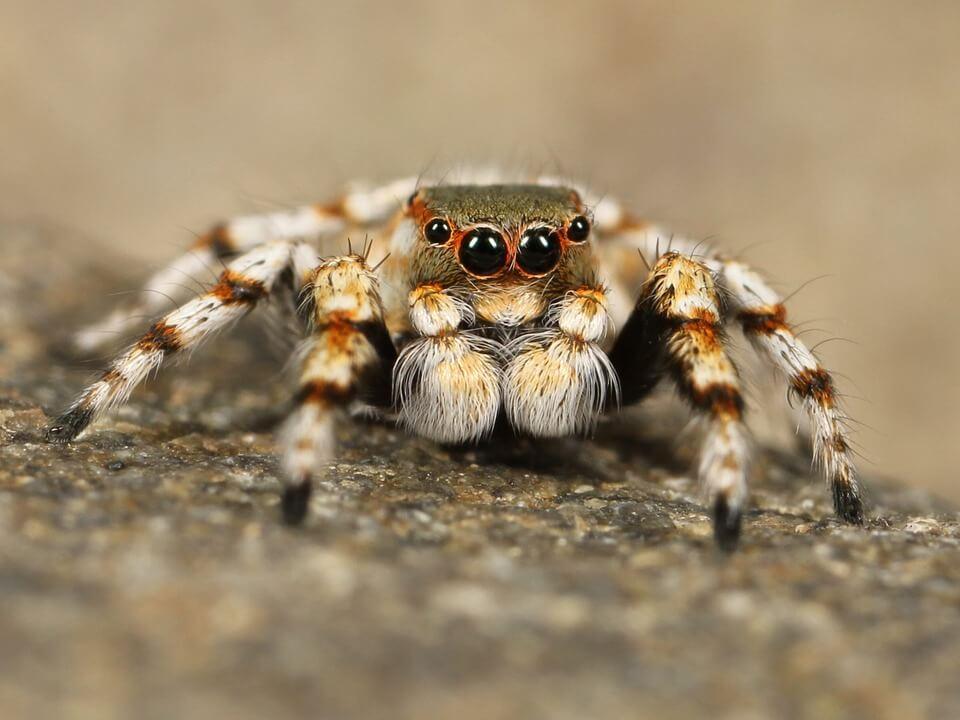 Significato onirico dei ragni.