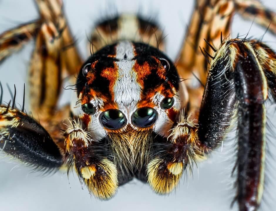 I ragni: significato nei sogni